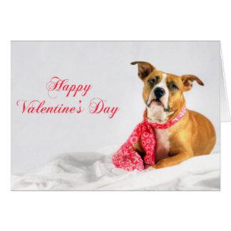 Happy Valentines Day Pitbull Puppy Card