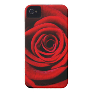 Happy Valentines Day Red Rose iPhone 4 Cover