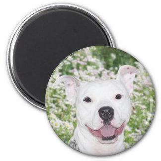 Happy white pitbull magnet