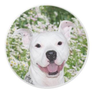 Happy white pitbull terrier ceramic knob