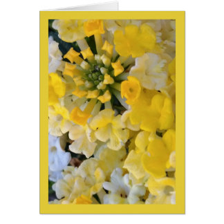 Happy Yellow Blooms- Song of Sol. 6:1 Greet. Card