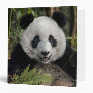 Happy young panda, China 3 Ring Binder
