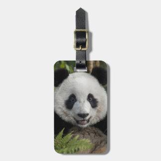 Happy young panda, China Luggage Tag