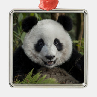 Happy young panda, China Metal Ornament