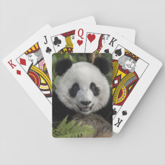 Happy young panda, China Playing Cards