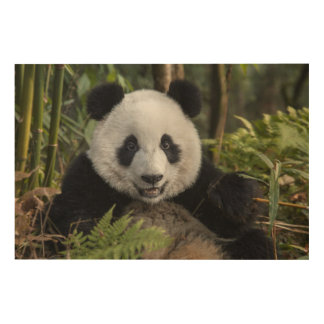 Happy young panda, China Wood Wall Art