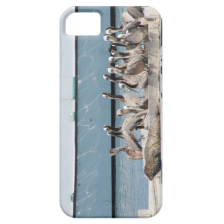 Harbor Friends iPhone 5 Cover