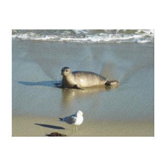 Harbor Seal at La Jolla California Canvas Print