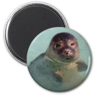 Harbor Seal Round Magnet Fridge Magnets