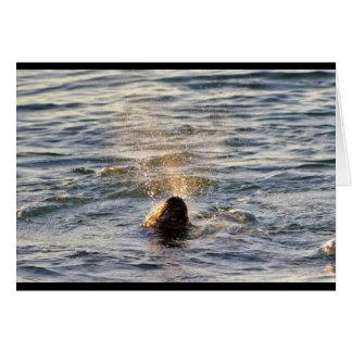 Harbor Seal Spouting Water Notecard