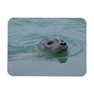 Harbor Seal swimming in Jokulsarlon glacial lake Rectangular Photo Magnet