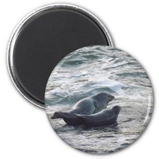 Harbor Seals 2 Inch Round Magnet