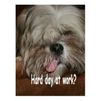 Hard day at work puppy dog shih tzu postcard