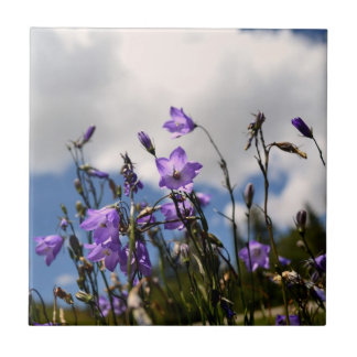 Harebells in the Sandias tile