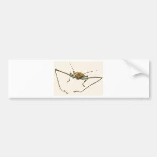 Harlequin Beetle Bumper Sticker