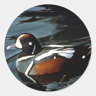 Harlequin Duck Classic Round Sticker