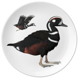Harlequin Duck Plate