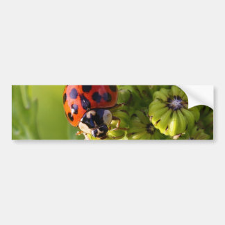Harlequin Lady Bug Beetle Harmonia Axyridis Car Bumper Sticker