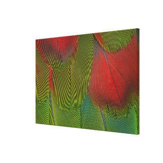 Harlequin Macaw Feather Abstract Canvas Print