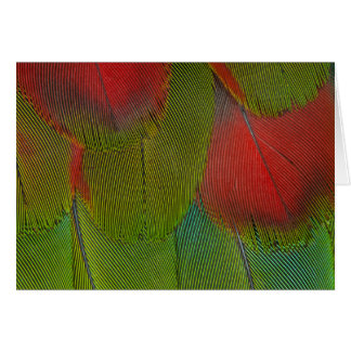 Harlequin Macaw Feather Abstract Card