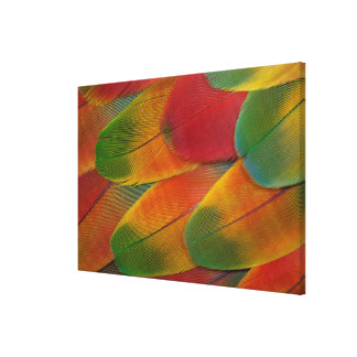 Harlequin Macaw parrot feathers Canvas Print