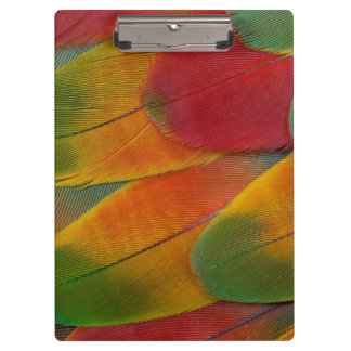 Harlequin Macaw parrot feathers Clipboard