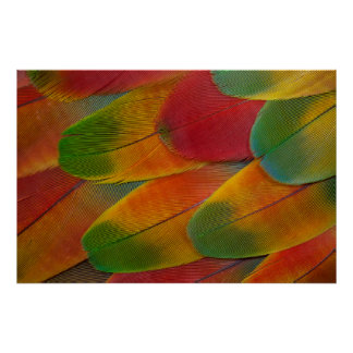 Harlequin Macaw parrot feathers Poster
