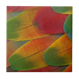 Harlequin Macaw parrot feathers Tile