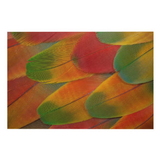 Harlequin Macaw parrot feathers Wood Print