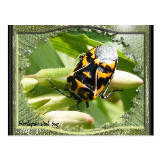 Harlequin stink bug calendar ~ postcard