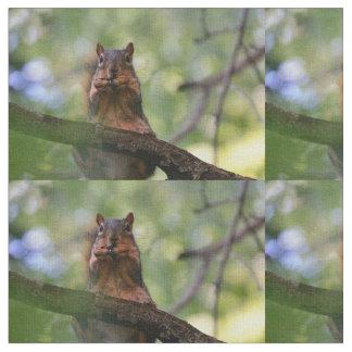 Harmonica squirrel fabric