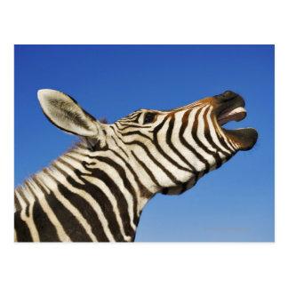 Harnas Wildlife Sanctuary, Namibia, Southern Postcard
