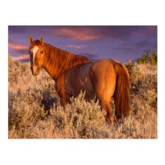 Harney County Wild horse stands alert Postcard