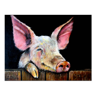Harold (Steptoe pig) Postcard