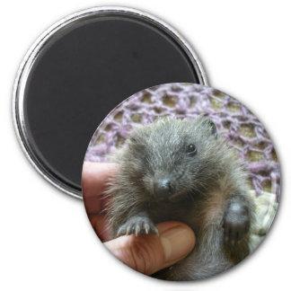 Harold The Hedgehog Magnet