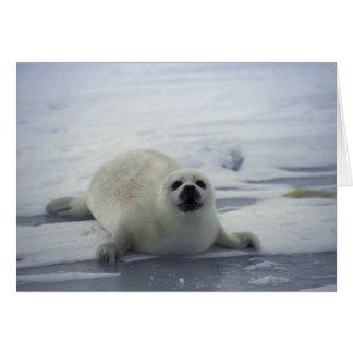 Harp Seal on Ice Card