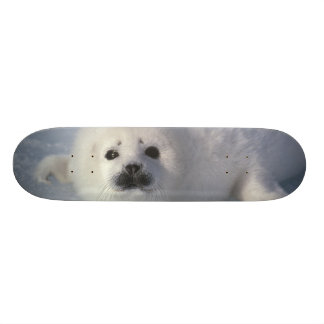 Harp seal Phoca groenlandica) A week-old harp Skateboards