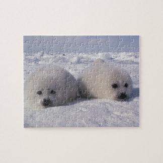Harp seal (Phoca groenlandica) Harp seal pups Jigsaw Puzzle