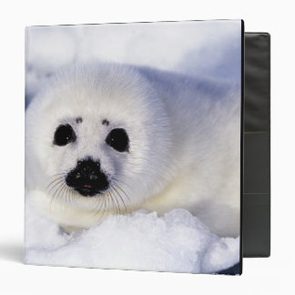 Harp seal pup ice Gulf of St. Lawrence, 3 Ring Binders