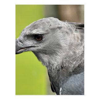 Harpy Eagle 2.JPG Postcard