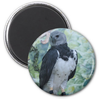 Harpy Eagle Captive 2 Inch Round Magnet