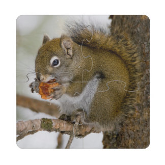 Harriman State Park, Idaho. USA. Red Squirrel Puzzle Coaster