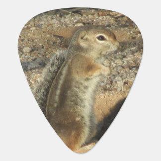 Harris' Antelope Squirrel Guitar Pick