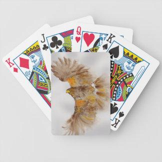 Harris Hawk, Bird of Prey Bicycle Playing Cards