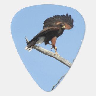 Harris Hawk Guitar Pick