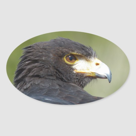 Harris Hawk Oval Sticker