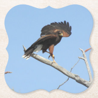 Harris Hawk Paper Coaster