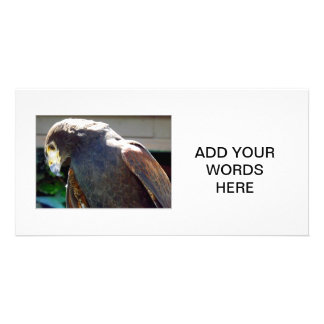 Harris' Hawk Customized Photo Card