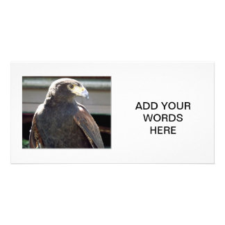 Harris' Hawk Personalized Photo Card