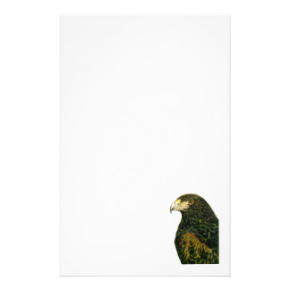 Harris Hawk  Stationery